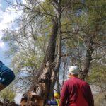 toaletare arbori alpinism utilitar